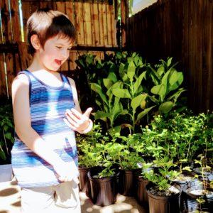 Gus admiring plants